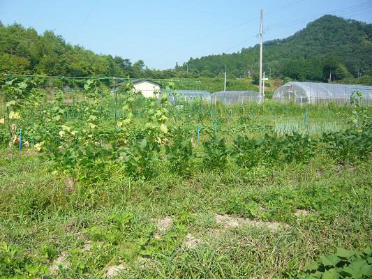 夏の畑.png